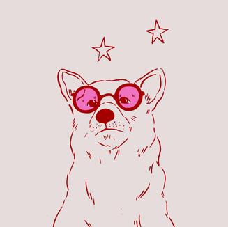Superstar Corgi
