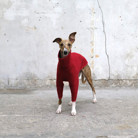 The Whippet Christmas Gift Guide