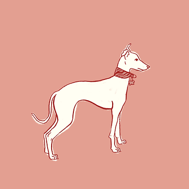 white whippet - lino.png