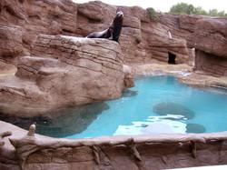 Sea Lion Habitat