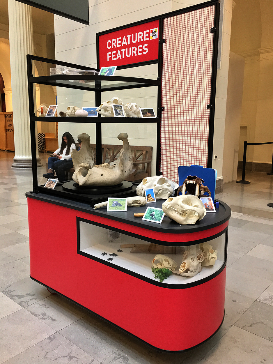 Custom display cases