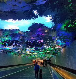 Forest Canopy, Atlanta Airport