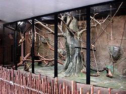 Primate Exhibit