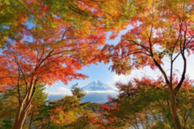 Wide for Landscape_๑๙๑๒๑๙_0005.jpg