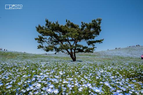 Hitachi seaside park_2000x1333.jpg