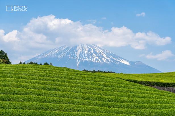 Tea Plant and Fuji2_2000x1333.jpg