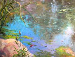 BDuffy-Pond Reflections