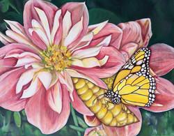 Butterfly on Corn in Pink Flowers