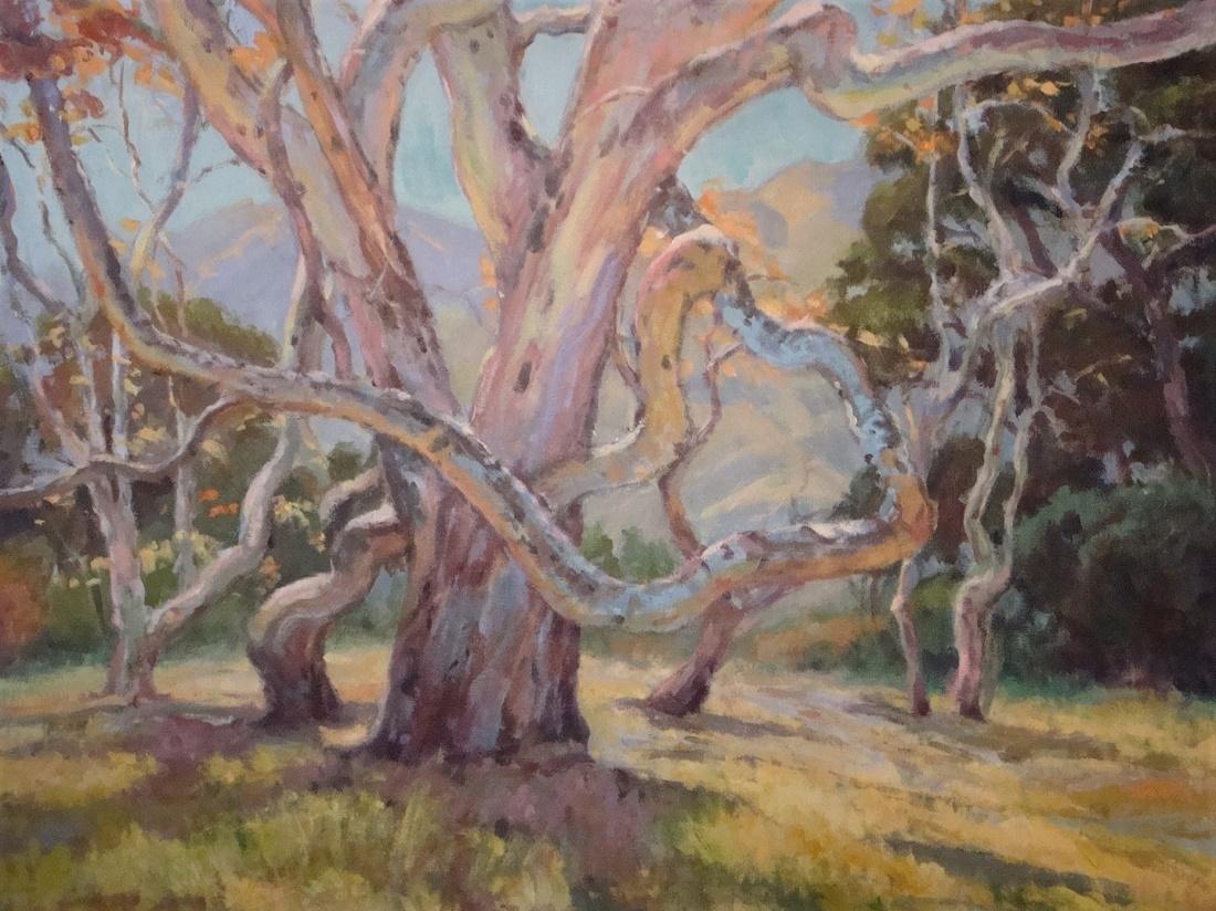 Fenton, Sycamore Cayon Tree