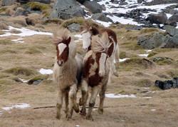 Skotta, Kasper und Valkyrja