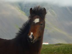 Sunna frá Skálafelli