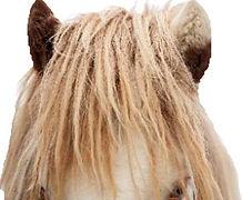 Helmschecke, Islandpferd, Hornafjordur, Deckhengste auf Island, Islandpferde, Islandske Hingste