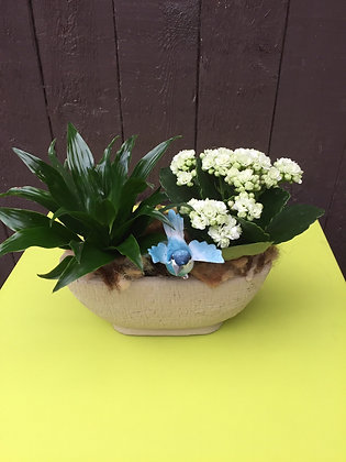 Klein langwerpig plantenbakje
