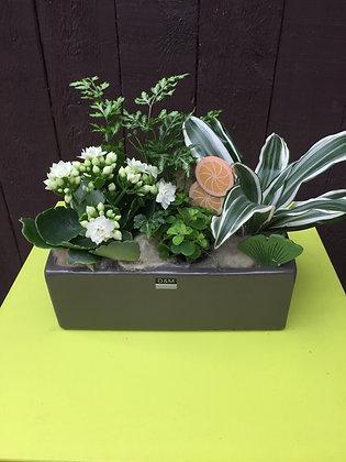 Langwerpig plantenbakje