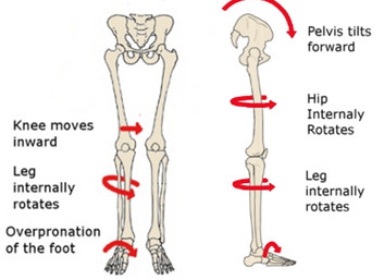 The Role of Your Foot