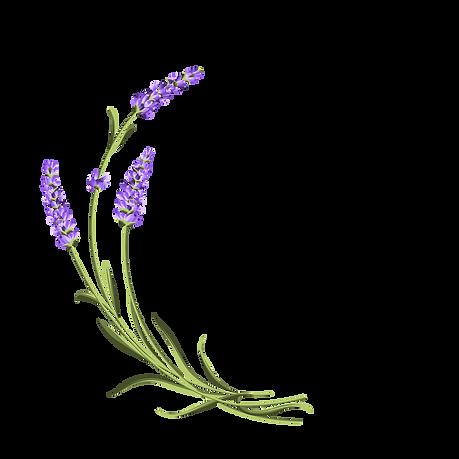 lavender-curved.png