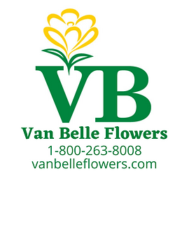 Van Belle Logo - PNG.png