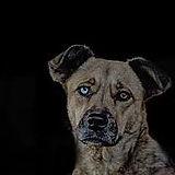 dogeyecontact.jpg