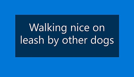 Walking past other dogs