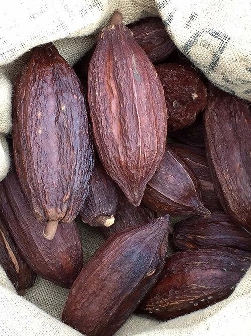 Dried Cacao Pod x1