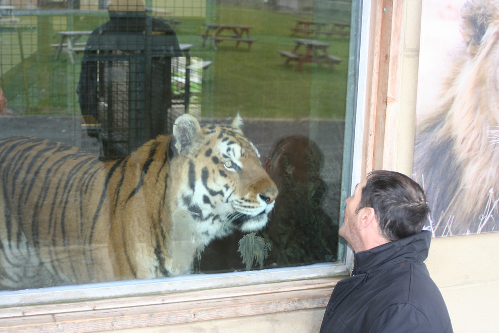 Iosif and the tiger!