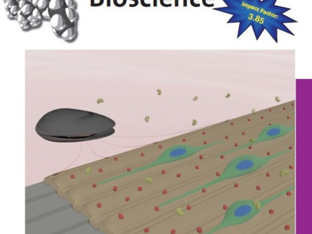 Biodegradable Nanotopography Combined with Neurotrophic Signals Enhances Contact Guidance and Neuron