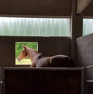 Pensione cavalli Varese