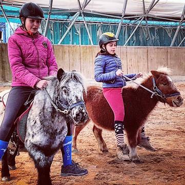 pony varese scuola equitazione
