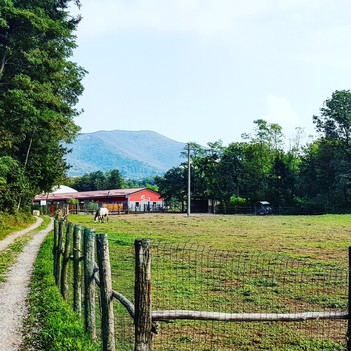 Centro Ippico i Salici