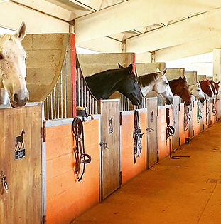 Box cavalli Varese
