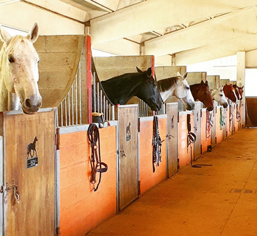 Box cavalli