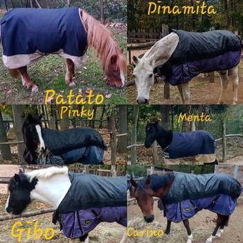 pony per bambini varese