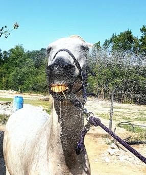 cavallo centro ippico i salici