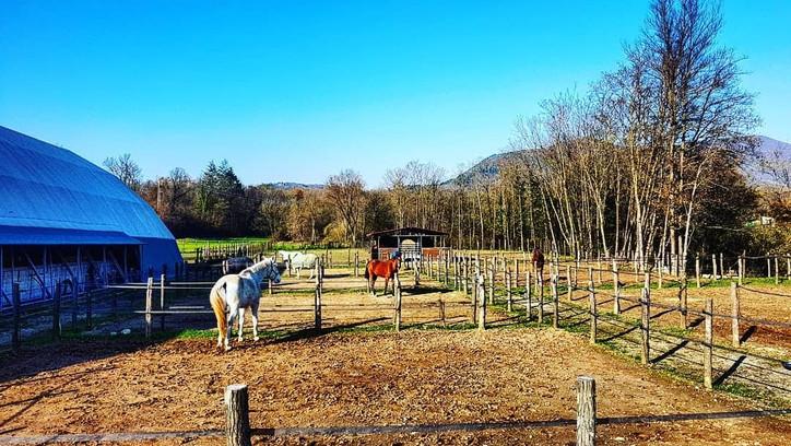 paddock cavalli Varese