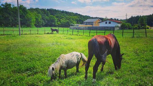 Pony Scuola equitazione