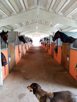 Box interno cavalli