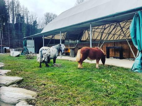 scuola equitazione pony