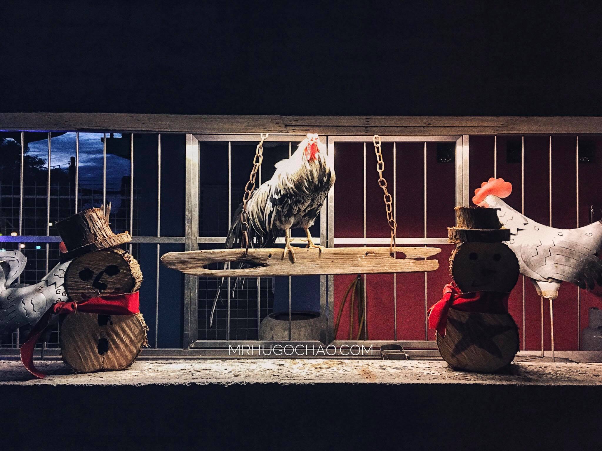 Cock, Taichung.