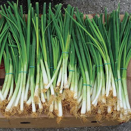 Green Onion (Bunch)