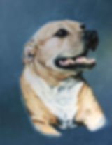 staffy-for-web.jpg