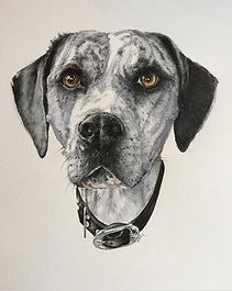 Watercolour of Dog