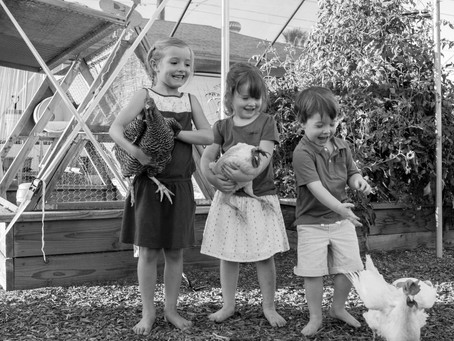 Family Photo Session in Phoenix- with Chickens!