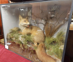 fox in display case