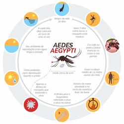 Conhecendo mais o mosquito