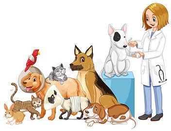 Оказываемые ветеринарные услуги
