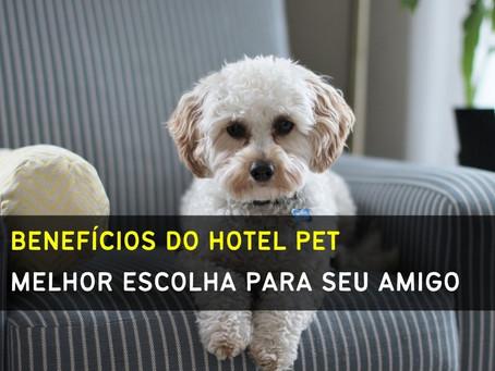 Saiba porque deixar seu pet em um hotel durante viagens é uma boa escolha