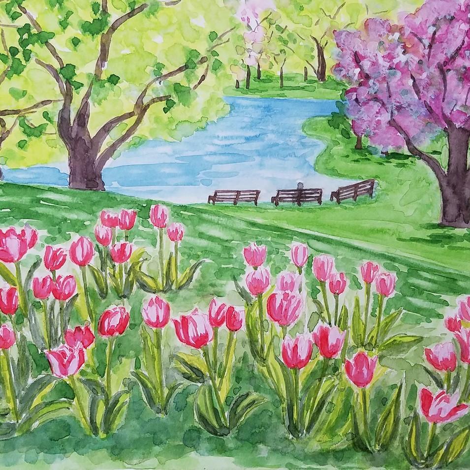 Tulips, Boston Public Garden