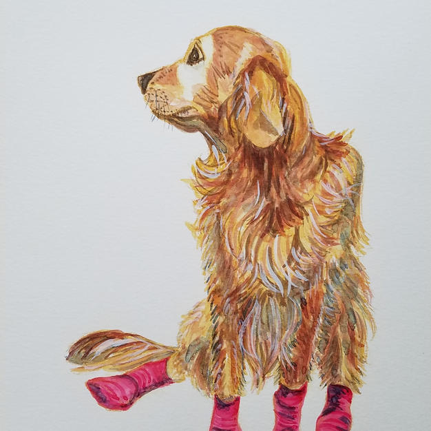 Cici's pink booties