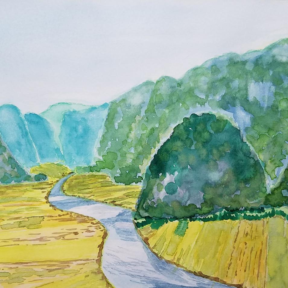 Rice field. Vietnam