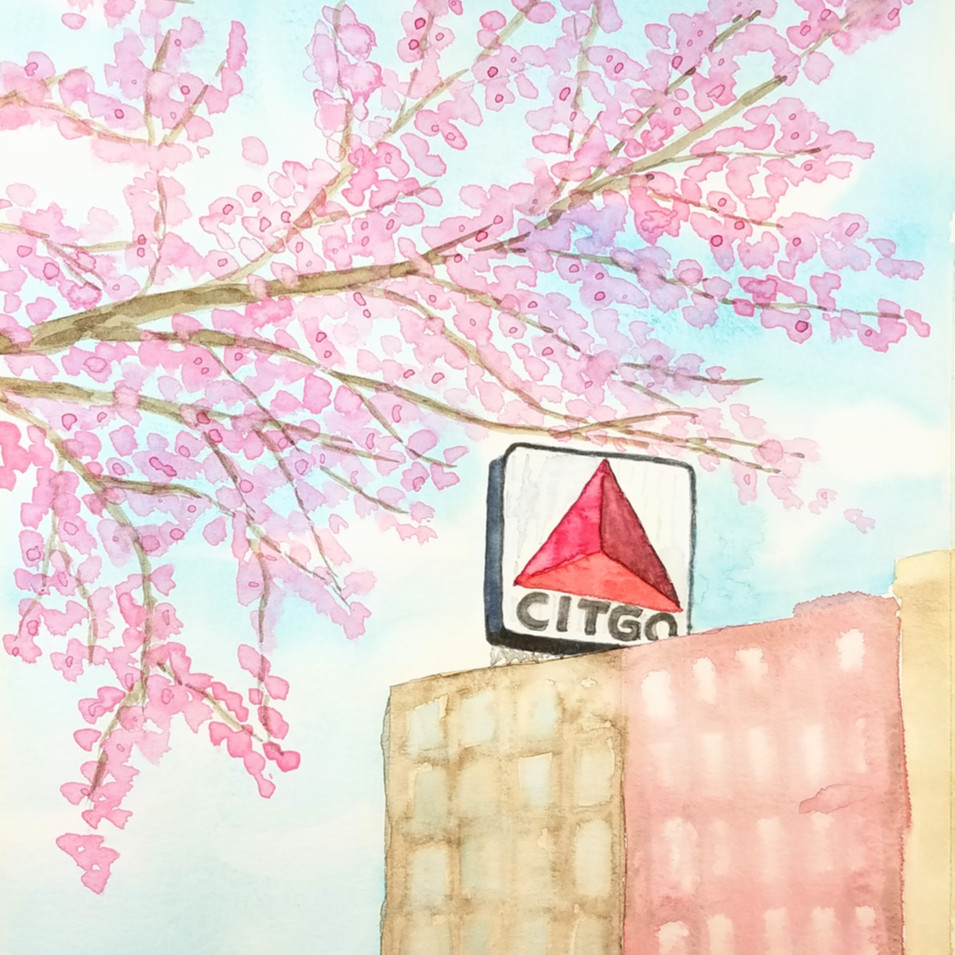 Cherry Blossoms and CITGO